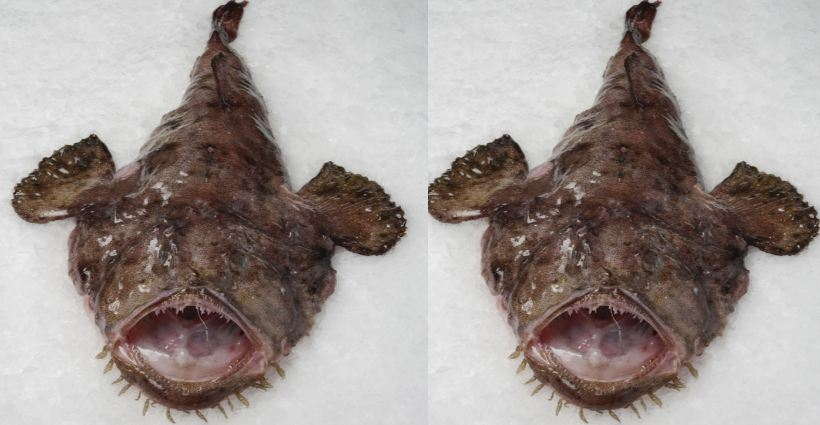 Monk Fish Top Ugliest Animals on The Earth 2018