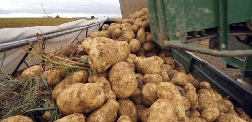Potato Producing Countries