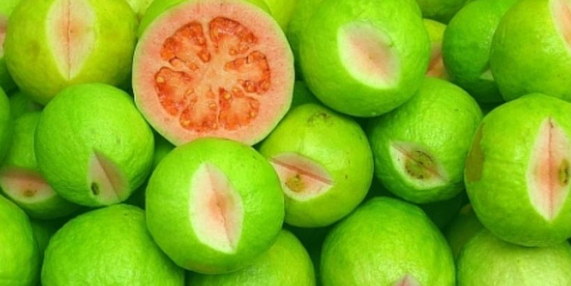 Nigeria Top Most Famous Largest Guava Producing Countries In The World 2018