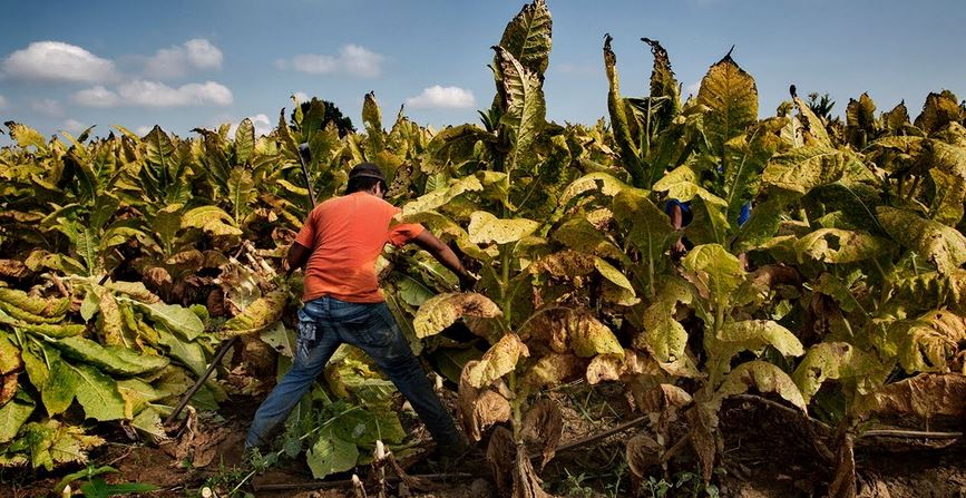 Tobacco Producing Countries