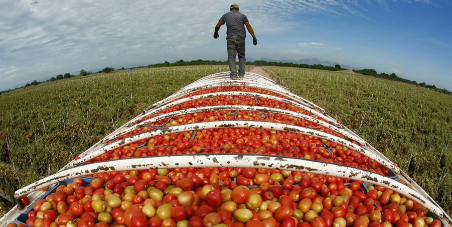 Tomato Producing Countries