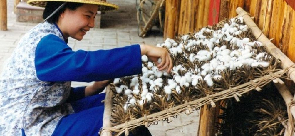 China Top Most Famous Largest Silk Producing Countries In The World 2017