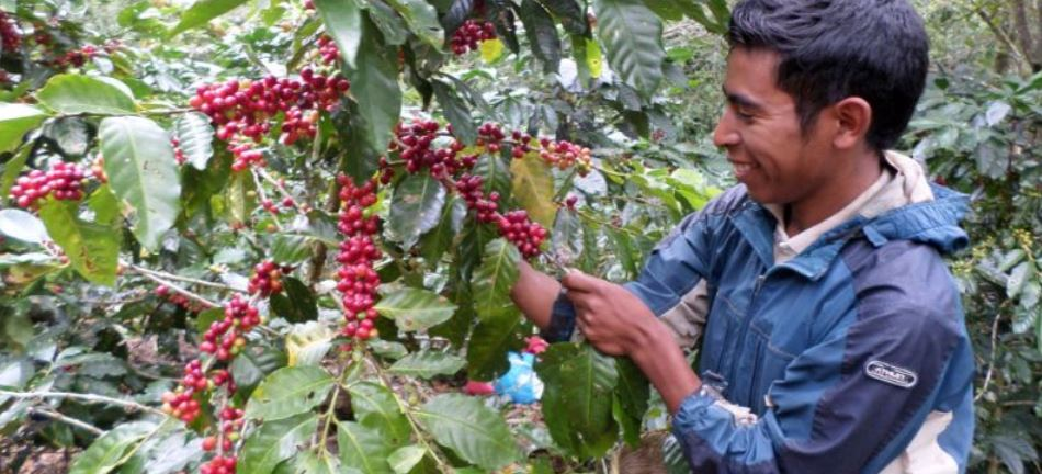 Coffee Producing Countries