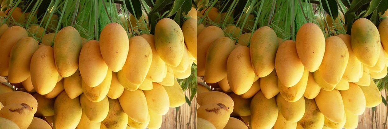 Largest Mango Producing Countries 2019