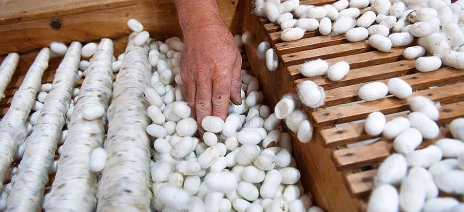 Turkey Top Most Popular Largest Silk Producing Countries In The World 2018