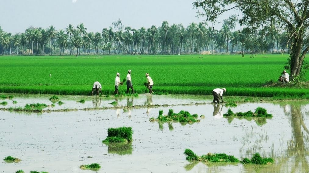 Largest Rice Producing State in India
