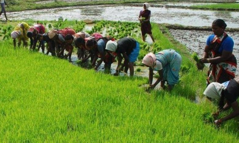 Rice Producing State in India