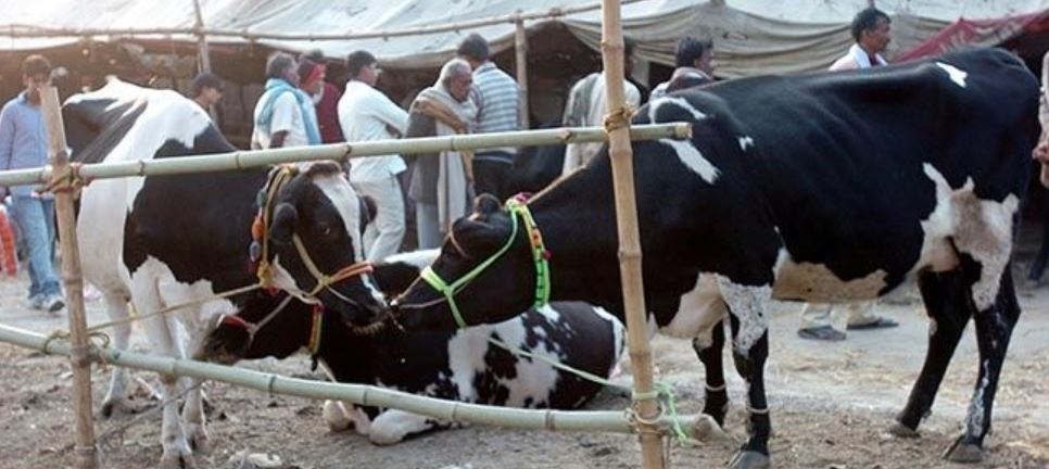 Highest Milk Producing State in India
