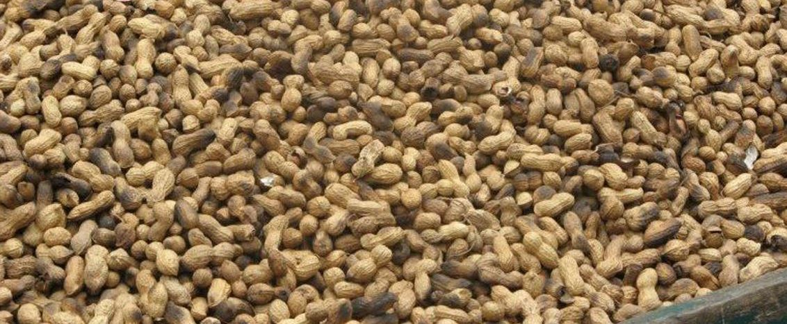 Peanuts Producing States in India