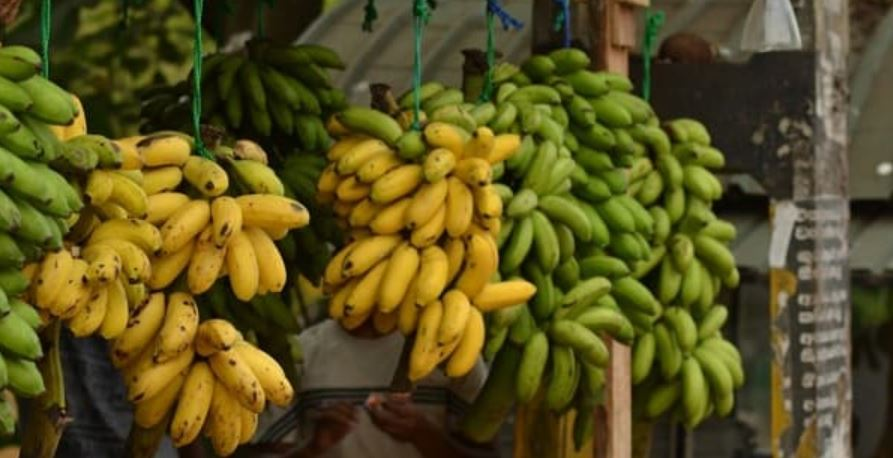 Largest Banana Producing States in India