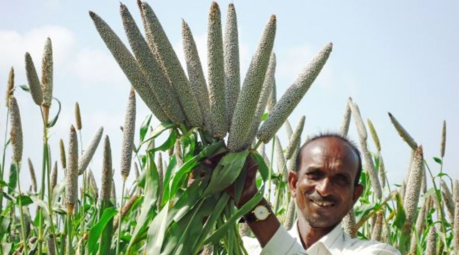 Largest Millets Producing States in India