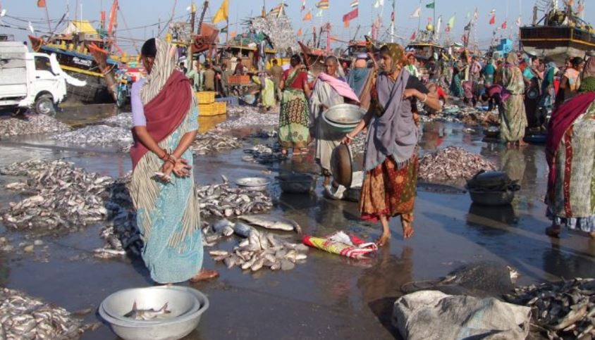 Gujarat Top Popular Largest Fish Producing States in India 2018