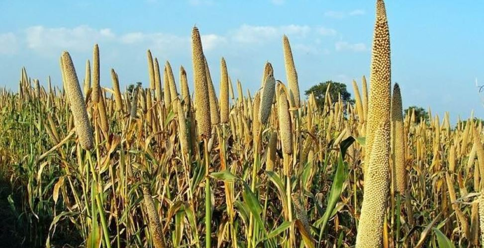 Jammu & Kashmir Top Popular Largest Millets Producing States in India 2017