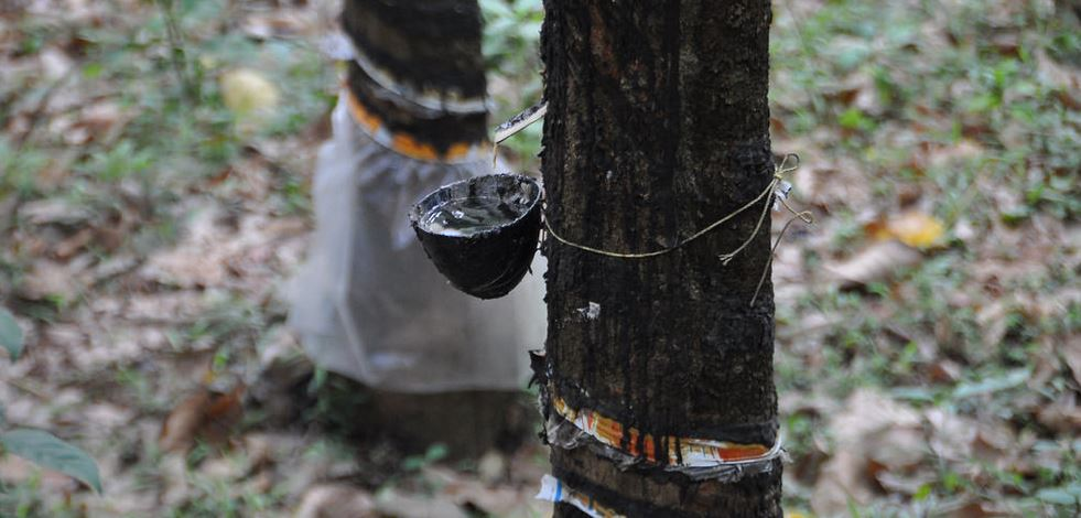 Rubber Producing States in India