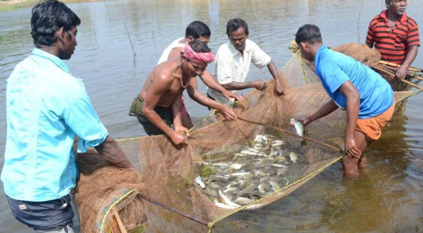 Largest Fish Producing States in India