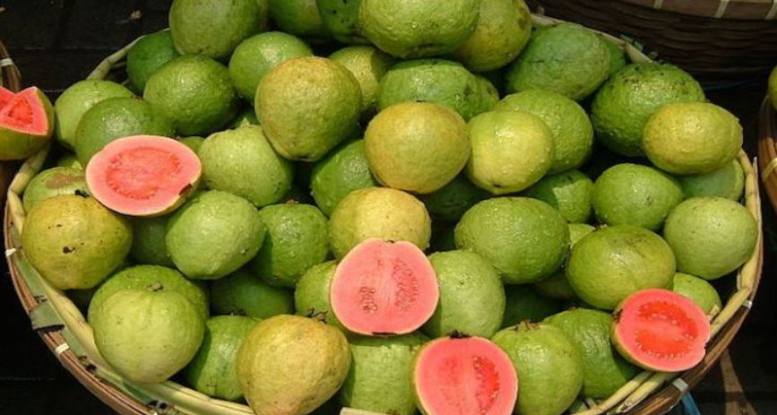 Largest Guava Producing States in India