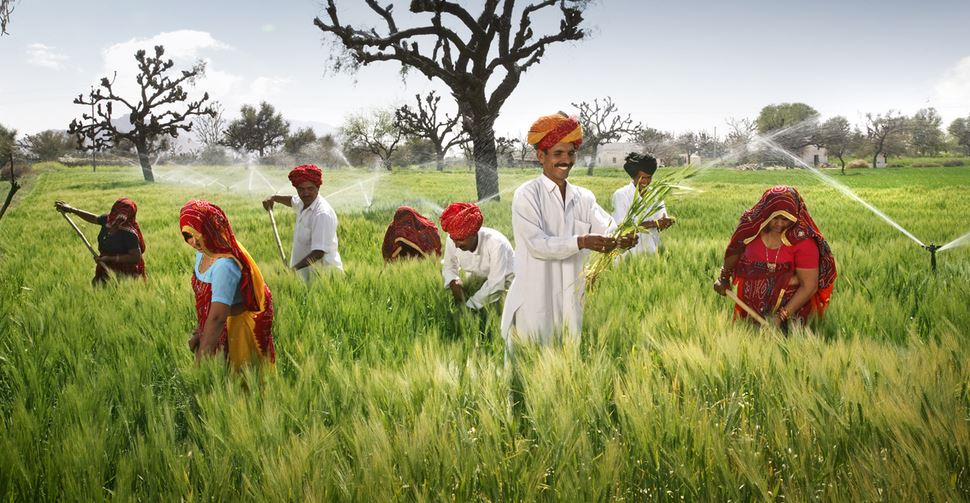 RAJASTHAN Top Famous Barley Producing States in India 2018