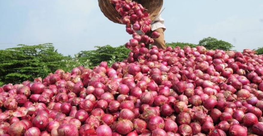 Largest Onion Producing States in India 2019