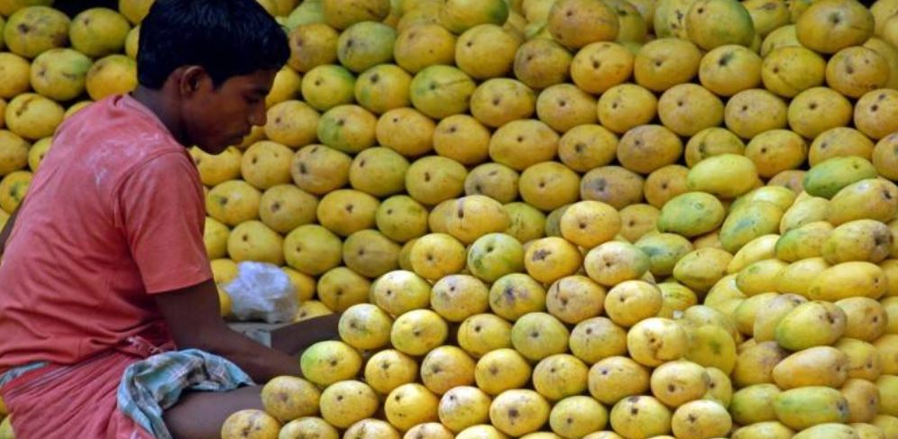 Largest Fruit Producing States in India
