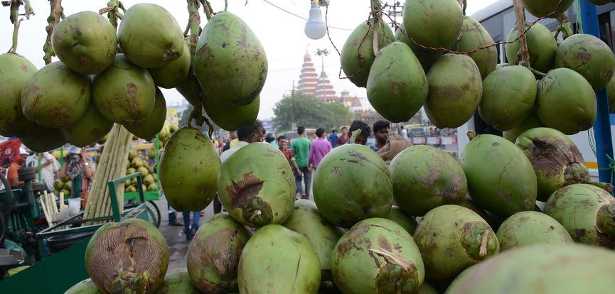 Largest Coconut Producing States in India