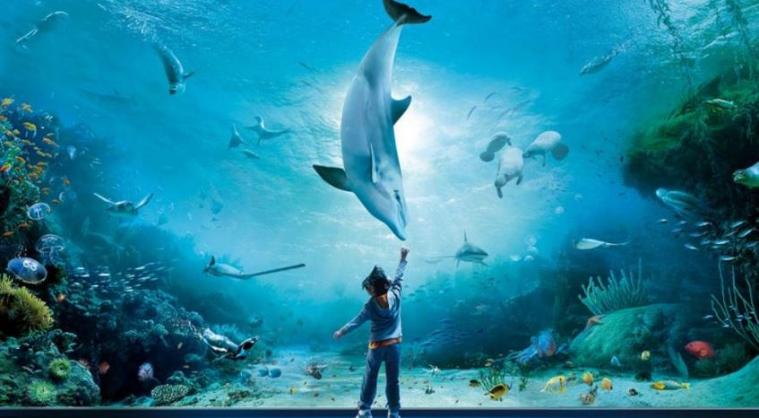 Largest Aquariums in the World
